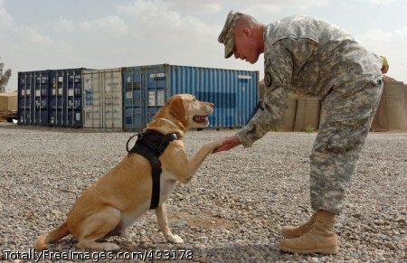 K9 Team Brings Staff Sgt. Chuck Shuck and his K9 partner, Sgt. 1st Class Gabe, both with 178th Military Police Detachment, 20th Military Police Battalion, congratulate each other for a job well done after a training session at Forward Operating Base Q-West.