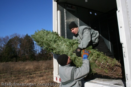 'Trees for Troops' Staff Sgt. Daniel Brunner and 1st Sgt. Tony Coluccio, both Soldiers with the New York National Guard's 42nd Infantry Division, load donated Christmas trees onto a FedEx truck at Ellms Farms in Charlton, N.Y., Nov. 28, as part of the 'Trees for Troops' program to provide servicemembers and their Families worldwide with live Christmas trees. Photo Credit: Dec 12, 2007