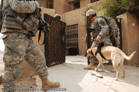 The Dogs of War Staff Sgt. Jason Robbins and his military working dog clear a house in Baghdad, Oct. 7. Photo Credit: Oct 23, 2007