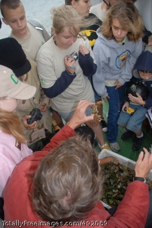 Island Adventure Boat captain Bernd Laager shows Camp A.R.M.Y Challenge participants different sea creatures during a 'watten safari.' Photo Credit: Aug 15, 2007