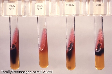 This triple sugar iron agar (TSI) tested for Salmonella (H2S+) a